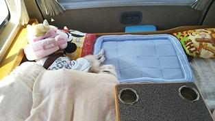 GW前半 長野県への犬連れ車中泊の旅 東部湯の丸SA編_b0080342_13394707.jpg
