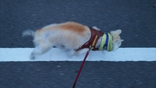 GW前半 長野県への犬連れ車中泊の旅 帰宅編_b0080342_14073899.jpg