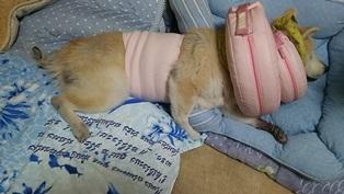 GW前半 長野県への犬連れ車中泊の旅 帰宅編_b0080342_14075489.jpg