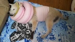 GW前半 長野県への犬連れ車中泊の旅 帰宅編_b0080342_14081084.jpg