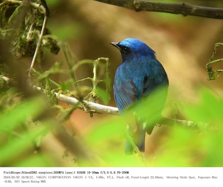 伊香保森林公園・シダの池 2018.5.2_c0062451_1616147.jpg