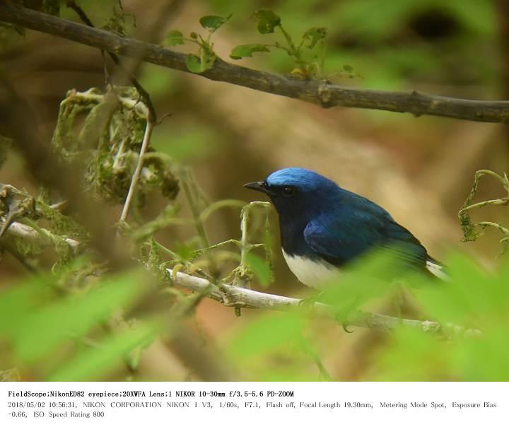 伊香保森林公園・シダの池 2018.5.2_c0062451_16162545.jpg
