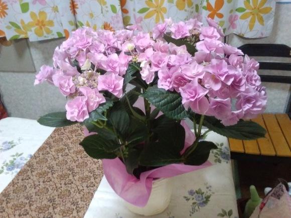 花、いろいろ_d0116059_21092897.jpg