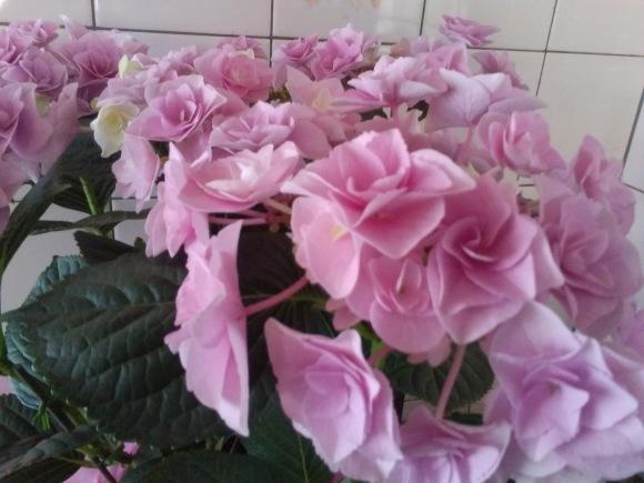 花、いろいろ_d0116059_21135007.jpg