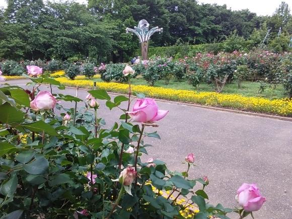 花、いろいろ_d0116059_21240253.jpg