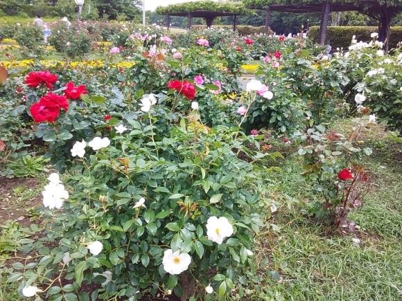 花、いろいろ_d0116059_21273120.jpg