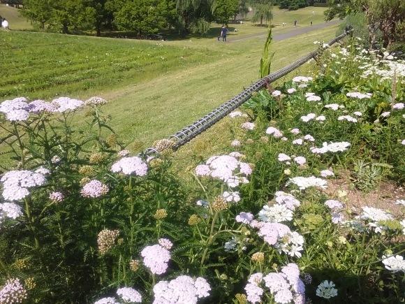 花、いろいろ_d0116059_21400996.jpg