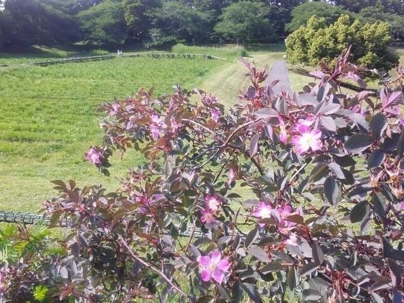 花、いろいろ_d0116059_21471445.jpg