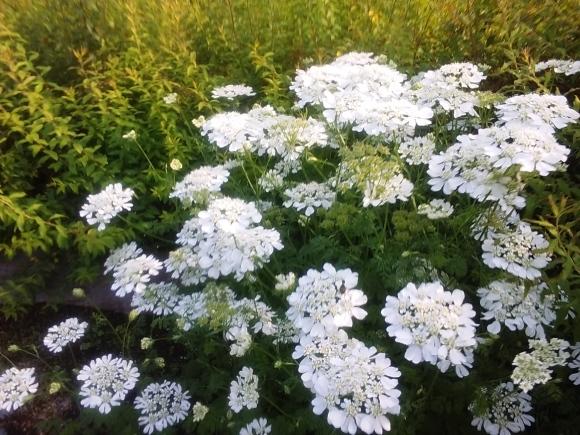 花、いろいろ_d0116059_22011220.jpg