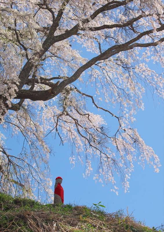 上発地の枝垂桜 2_f0018464_654551.jpg