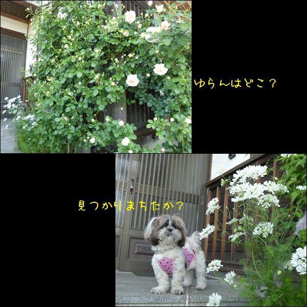 e0234881_22364607.jpg