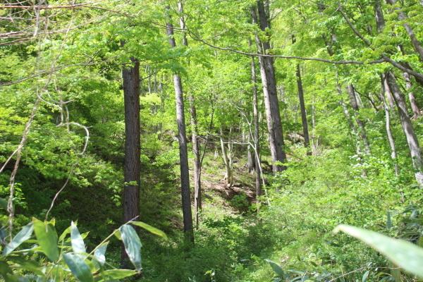舘岩の山も初夏の装いになりました。_f0227395_13380960.jpg