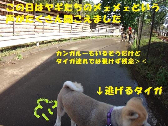 f0121712_06215697.jpg