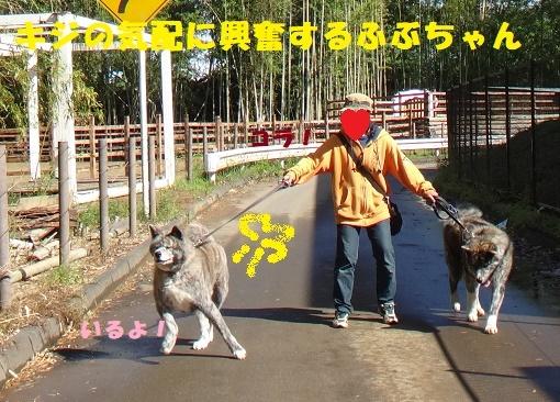 f0121712_06344330.jpg