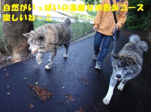 f0121712_06511701.jpg