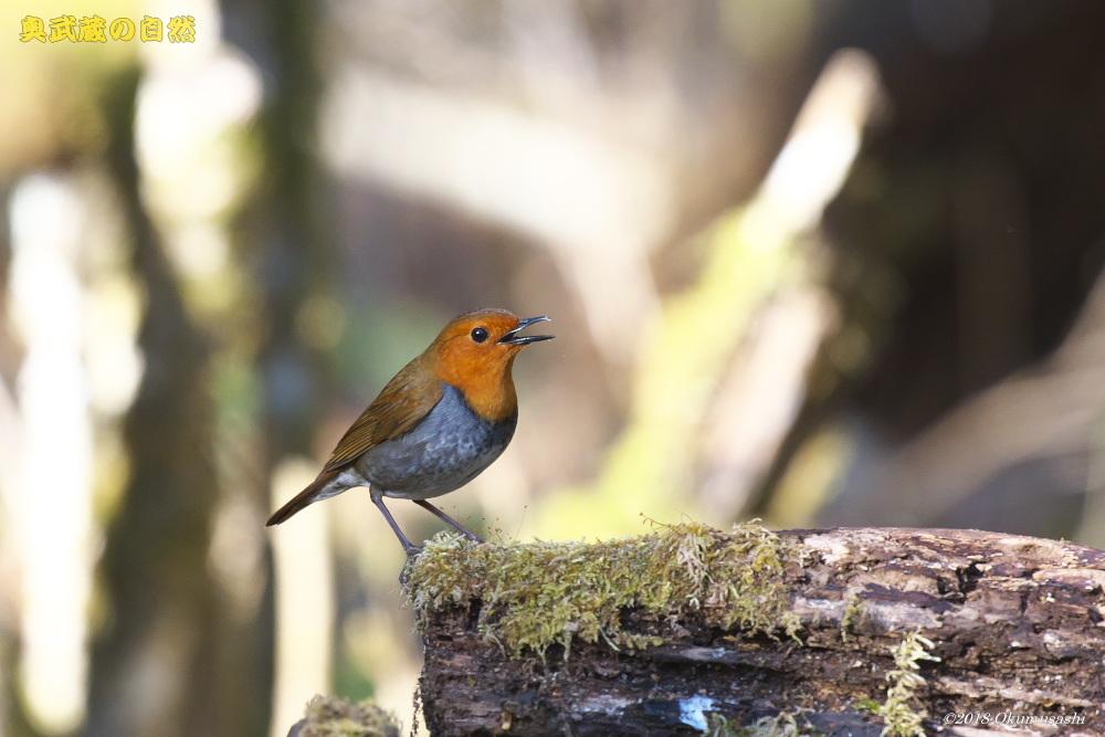 撮った鳥全部シリーズ_e0268015_13415411.jpg