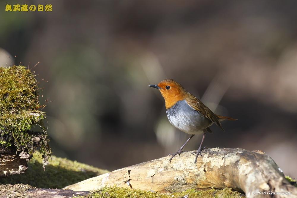撮った鳥全部シリーズ_e0268015_13432205.jpg