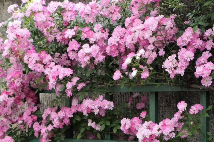 5月 庭の花たち (2)_d0150720_17263076.jpg