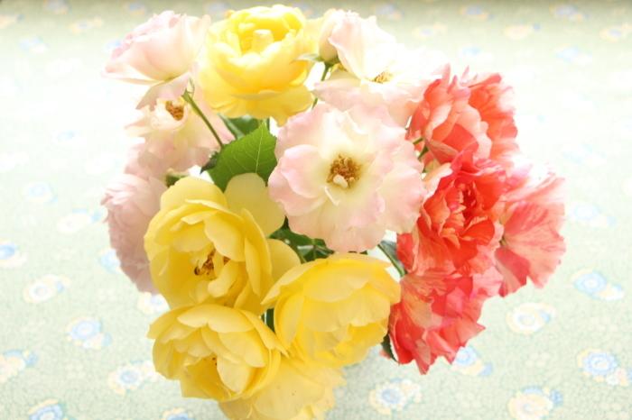 5月 庭の花たち (2)_d0150720_17264371.jpg