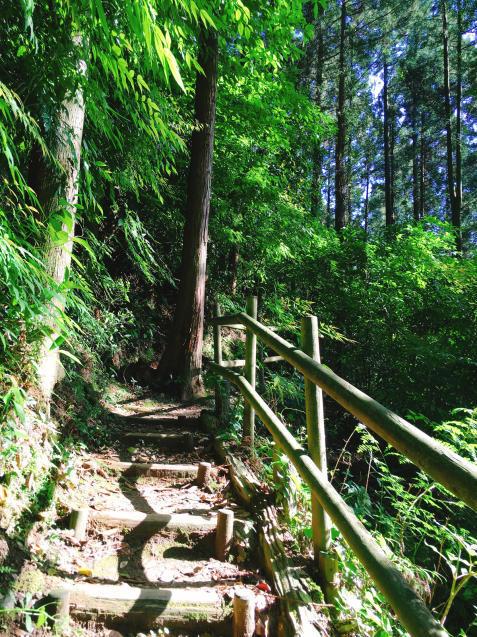 森林浴でリフレッシュ!5月サロン空き状況_f0140145_23123496.jpg