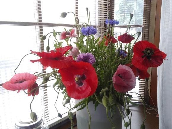 花、いろいろ_d0116059_10421041.jpg