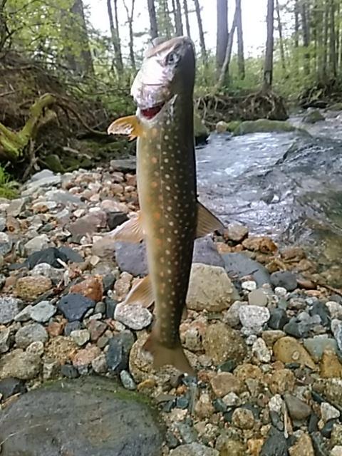 喜多方に流れる河川で釣りをして来ました。_c0160368_19434098.jpg