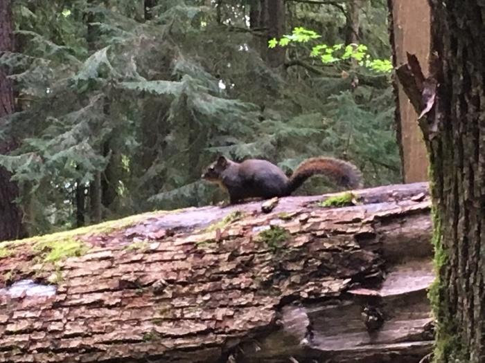2018.4.28-5.3 シアトル&ポートランドを巡るBeer旅 day5 ~WildWood Trail編~_b0219778_14155605.jpg
