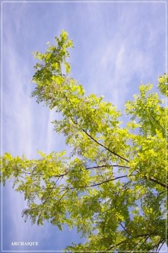 ** 緑の風を感じてください **_c0207890_16470187.jpg