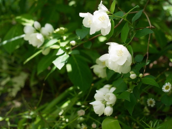 庭のキラキラ_e0276411_22011649.jpg