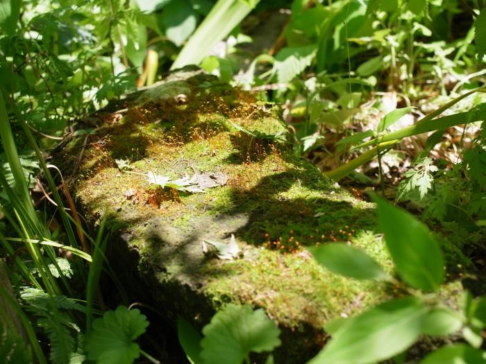 庭のキラキラ_e0276411_22020161.jpg