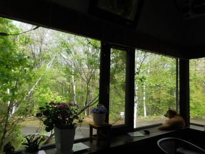 5月14日 月曜日  雨 晴れ 雨  13度_f0210811_08490018.jpg
