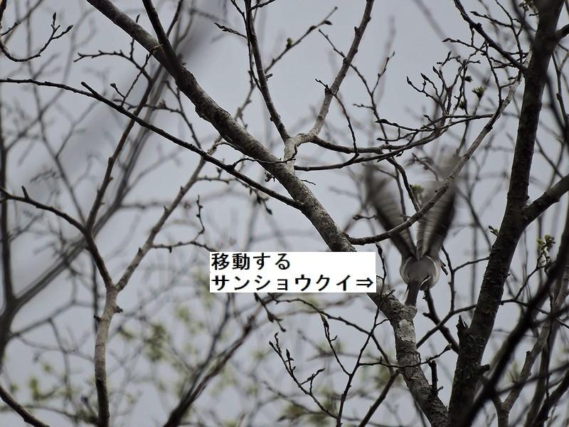 c0039919_15160343.jpg