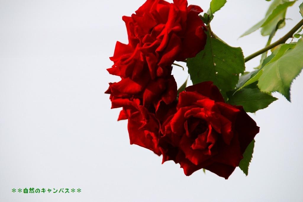 e0052135_15372708.jpg