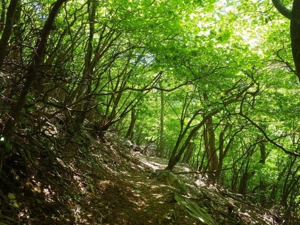 新緑の英彦山へ_e0164643_15313303.jpg