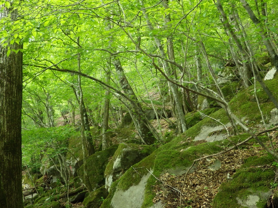 新緑の英彦山へ_e0164643_15315681.jpg