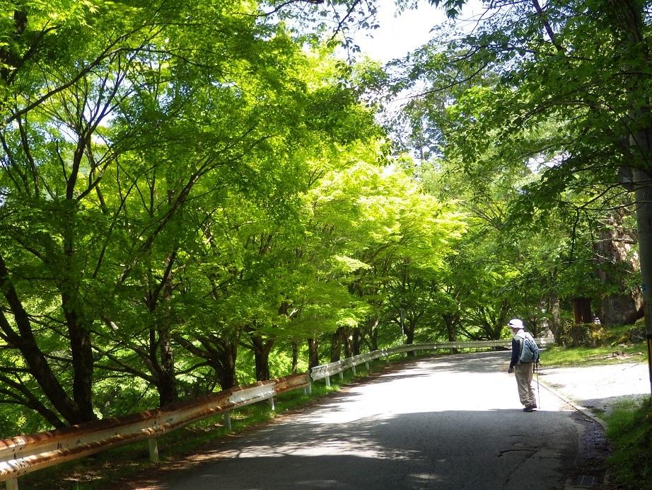 新緑の英彦山へ_e0164643_15411031.jpg