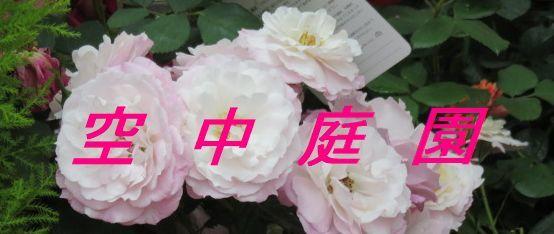 b0133750_19442056.jpg