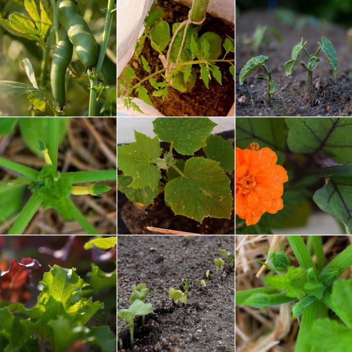 野菜の芽や花を愛でる。_d0032761_18170984.jpg