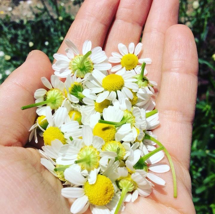 新緑と花々のyojoenから_b0218062_15053661.jpg