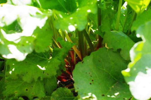 ルバーブ、紫花豆、小麦粉の追加ご注文を承ります。_c0110869_14485428.jpg