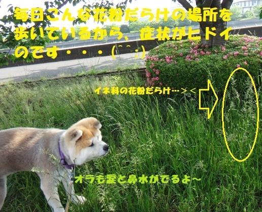 f0121712_14395588.jpg