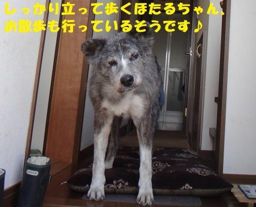 f0121712_15554993.jpg