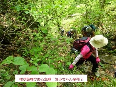 シロヤシオ、咲く三方倉山_e0265627_14352782.jpg