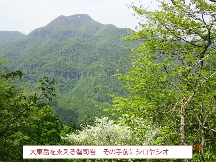 シロヤシオ、咲く三方倉山_e0265627_14361494.jpg