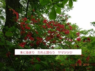 シロヤシオ、咲く三方倉山_e0265627_14362222.jpg