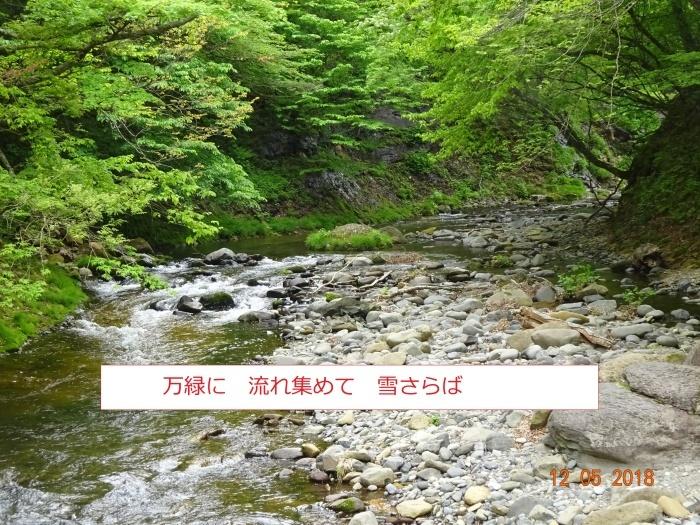 シロヤシオ、咲く三方倉山_e0265627_14365226.jpg