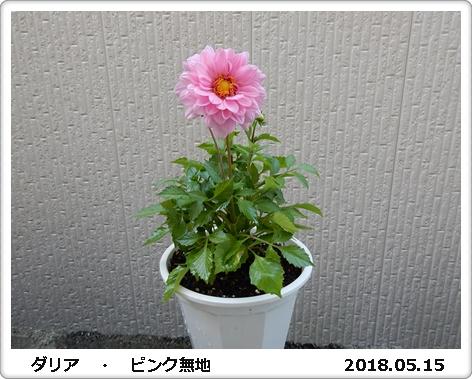 e0033229_1851533.jpg