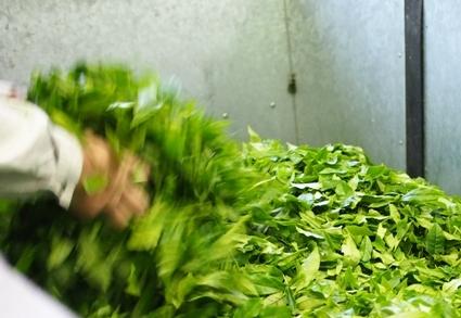 お茶刈り日和_b0185232_21422193.jpg