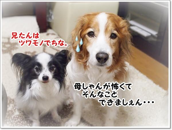 d0013149_00511181.jpg