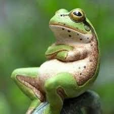 「  立夏 にて 腕まくり する 蛙 かな  」─  大 宮  エ リ  ー_c0328479_11013483.jpg
